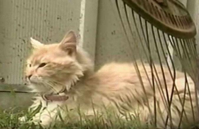 Kotka, która niedawno straciła kocięta, ukradła psu nowo narodzonych szczeniąt