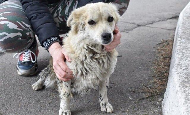 Po kąpieli i fryzjerze mały pies, który mieszkał na ulicy, przeobraził się i znalazł dom