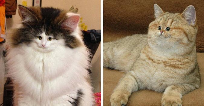 Te koty, które mają śmieszną mordkę, rozbawią cię