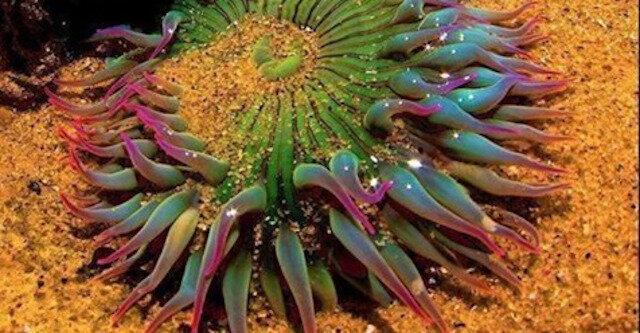 16 przykładów burzliwej i żywej fantazji matki natury