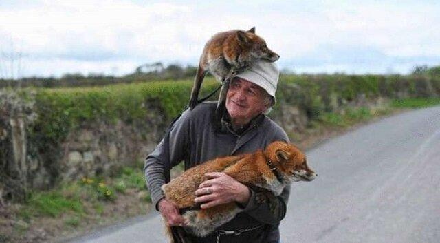 Mężczyzna znalazł dwa porzucone lisy i tak mu się odwdzięczyły