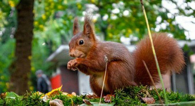 Mężczyzna zbudował niesamowity karmnik i czekał 14 godzin, aż wiewiórka go uruchomi