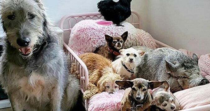 Amerykanin aranżuje spokojną starość dla zwierząt porzuconych przez właścicieli