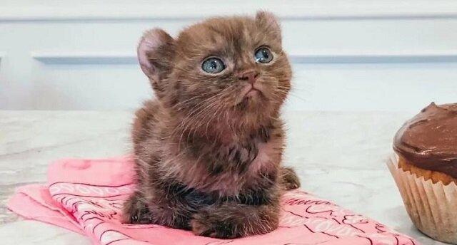 Kociak z uszkodzonymi łapkami i z dziwnymi uszami znalazł rodzinę