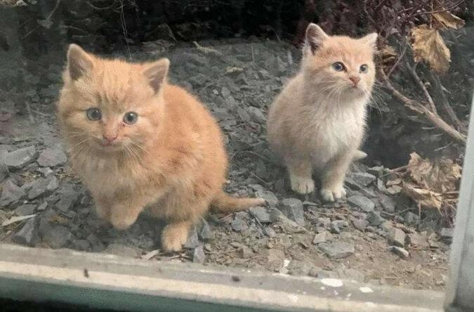 Głodne kocięta znalezione w strefie przemysłowej są gotowe zrobić dla siebie wszystko