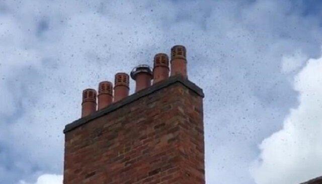Brytyjską rodzinę obudził w nocy dziwny brzęczący dźwięk. Były to pszczoły