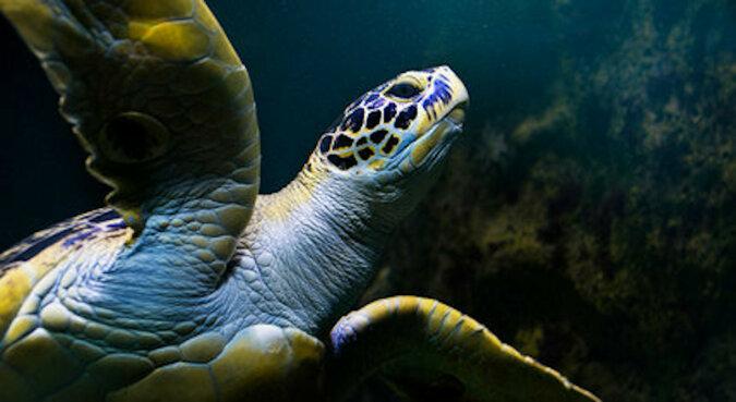 Liczy się każde życie: został wynajęty prywatny odrzutowiec, by uratować amerykańskiego żółwia bardzo rzadkiego gatunku