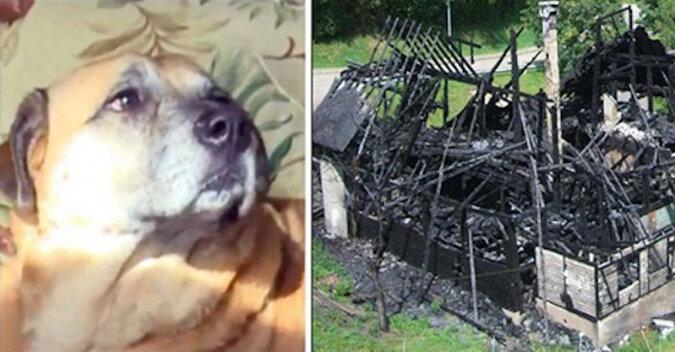 Pies został uratowany podczas pożaru, a kilka miesięcy później zaprowadził ludzi do czarnej dziury w spalonym domu