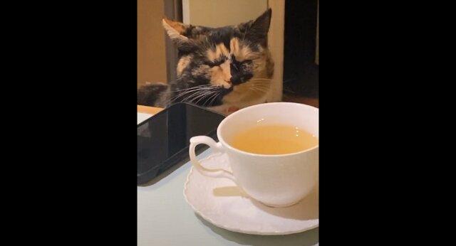 Kot usiadł obok posiekanej cebuli, zapłakał i nic nie rozumie - zabawny filmik