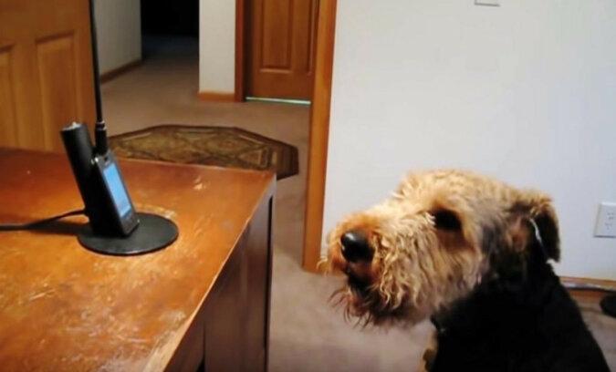 """Pies bardzo tęsknił za """"mamą"""" i postanowił do niej zadzwonić. Wzruszająca rozmowa"""