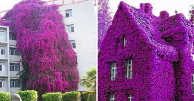 """Zdjęcia najpiękniejszych domków """"kwiatowych"""" na świecie"""