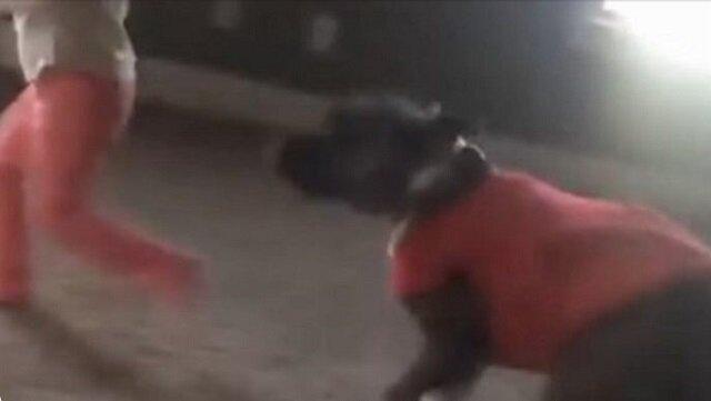 """Pies widzi dziewczynę wykonującą """"Gwiazdę"""" - jego reakcja wywołała śmiech całej rodziny"""
