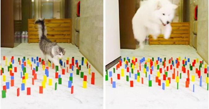 Koty kontra psy: który z nich przejdzie bez dotykania ani jednej detali