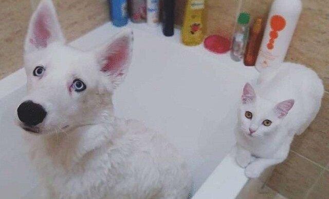 Właściciele chcieli zabrać kociaka ze schroniska dla swojego szczeniaka, ale kotek już czekał na nich na ulicy
