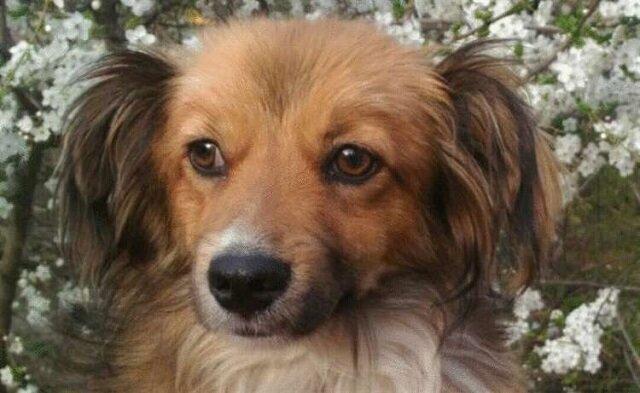 Pies umierał z głodu. Dali mu kiełbasę. Zobacz komu on ją zaniósł!