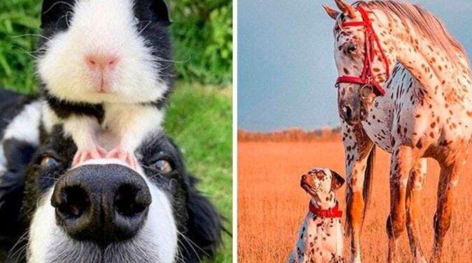 Zwierzęta, które niespodziewanie znalazły bardzo podobnych do siebie zwierząt wśród innych gatunków
