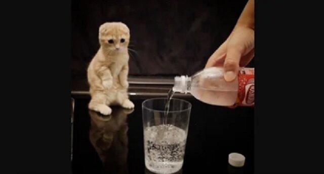 Kociak po raz pierwszy widzi wodę gazowaną - jego zabawna reakcja pokazana jest na filmiku