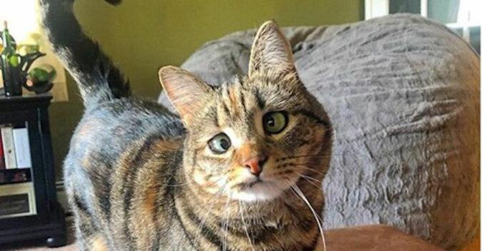 """Historia zezowatej kotki Olive udowadnia – nie ma """"niewłaściwych"""" zwierząt"""